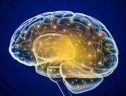 Brain-0001-880x