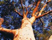 Tree-0002-880x