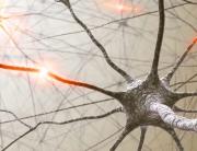 neurons-0008-880x